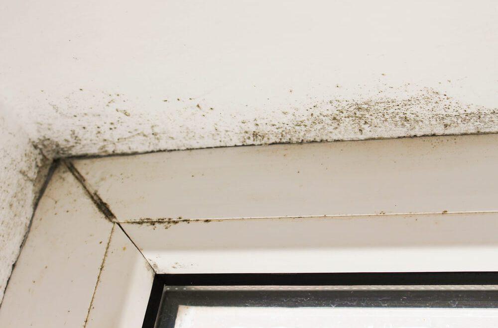 Czy okna moga byc przyczyna wilgoci w domu