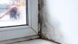 usuwanie pleśni na oknie