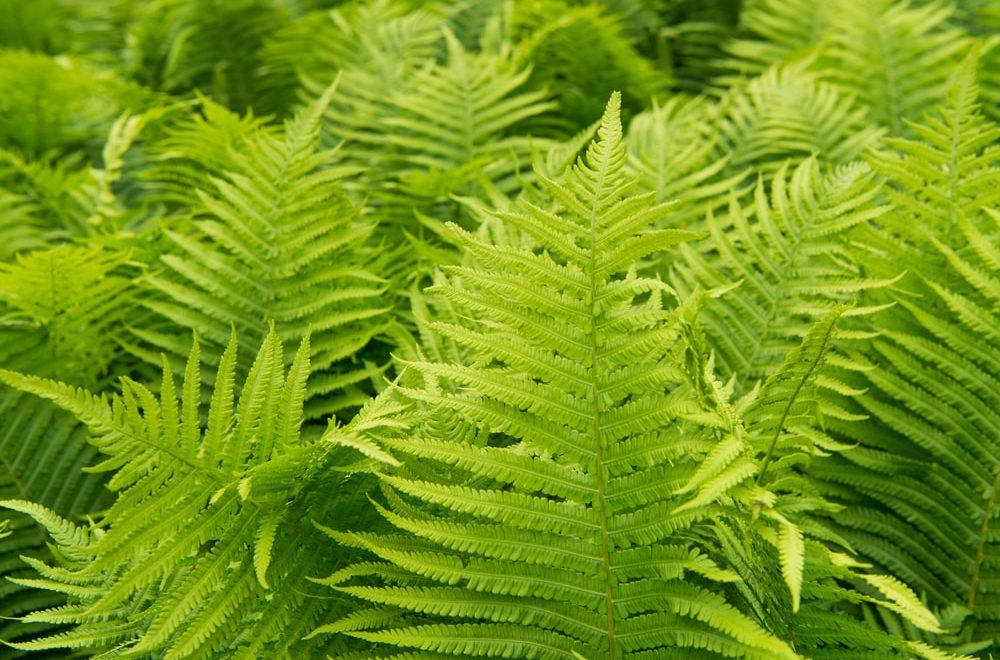 Jakie rosliny dobrze absorbuja wilgoc